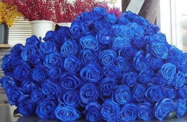 فروش عمده گل رز با رنگ های مختلف در سایت گل فوری