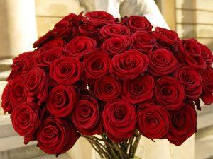 گل فوری و فروش عمده گل رز