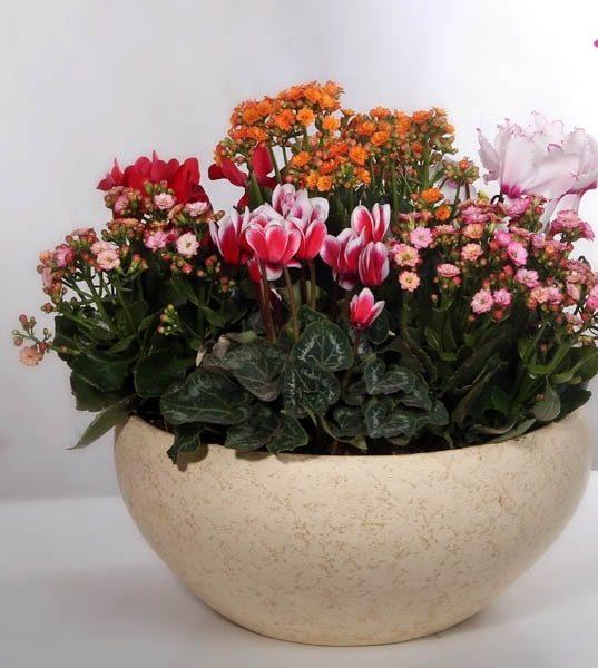 گلدان زیبای آپارتمانی